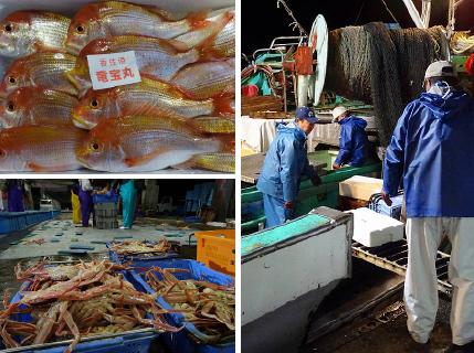 セリでは船ごとに魚が並べられる。