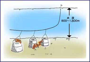 ベニズワイカニかご漁業