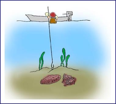 浅海(採貝藻)漁業