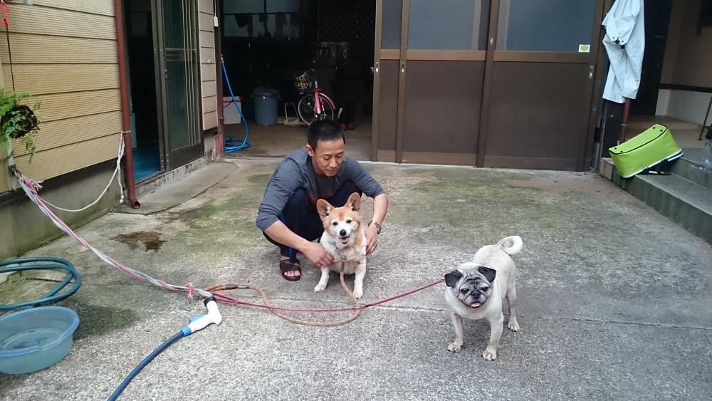 二匹の犬と戯れる山本さん